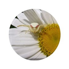 "Goldenrod Crab Spider On Daisy 3.5"" Button"