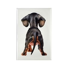 Dachshund Puppy Rectangle Magnet