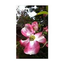 Dogwood Blossom Decal