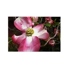 Dogwood Blosso Magnets