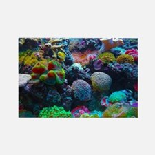 Beautiful Coral Reef Magnets