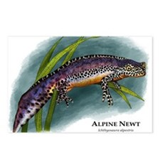 Alpine Newt Postcards (Package of 8)