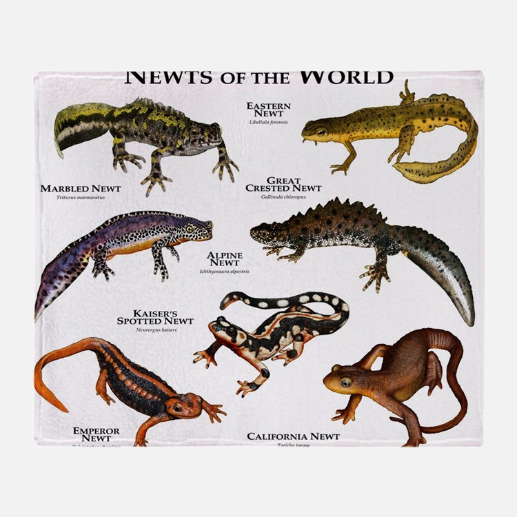 great crested newt life cycle home accessories unique
