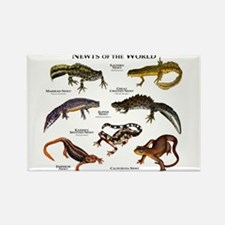Newts of the World Rectangle Magnet