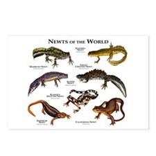 Newts of the World Postcards (Package of 8)