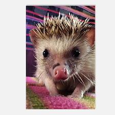 Hedgehog Postcards (Package of 8)