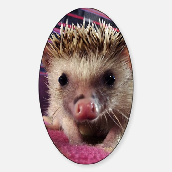 Hedgehog Sticker (Oval)