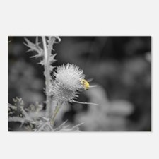 Bee and Thistle Postcards (Package of 8)
