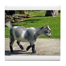 Pygmy Goat Tile Coaster
