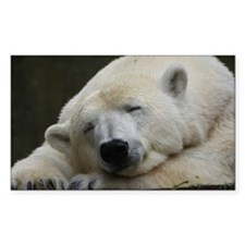 Polar bear 011 Decal
