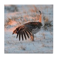 Sharptail Grouse Tile Coaster