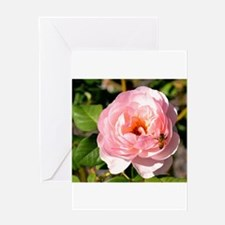 Pale Pink Rose with honey bee Greeting Cards