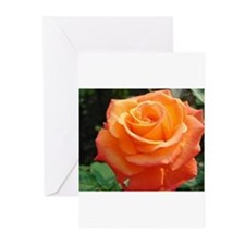 Unique Rose photography Greeting Cards (Pk of 20)