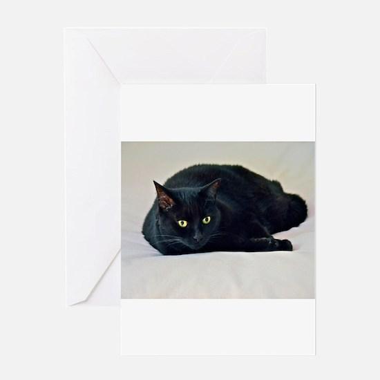 Black Cat! Greeting Cards