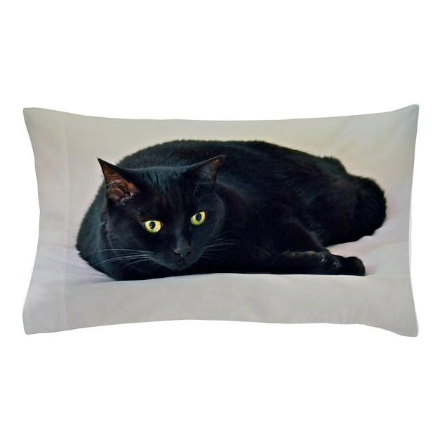 Black Cat Pillow Case By Harmonimages