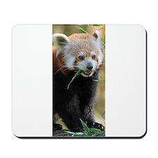 Red Panda 005 Mousepad