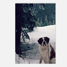 St. Bernard, Molly Postcards (Package of 8)