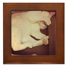 Soft kitty  Framed Tile