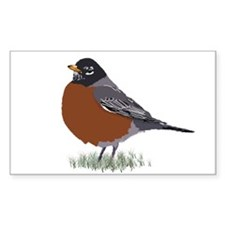 American Robin Decal