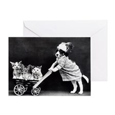 Funny Birthday cats photo Greeting Card