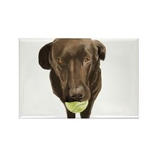 labrador retiever with a tennis ball Magnets
