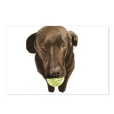 labrador retiever with a tennis ball Postcards (Pa