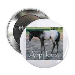 Appy foal 2.25