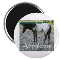 Appy foal Magnet