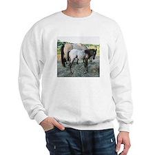 Appy foal Sweatshirt