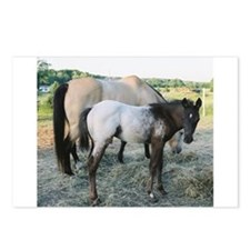 Appy foal Postcards (Package of 8)