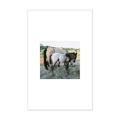 Appy foal Posters