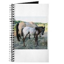 Appy foal Journal