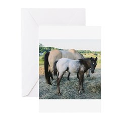 Appy foal Greeting Cards (Pk of 10)