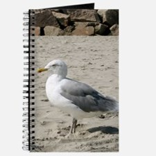 Seagull Journal