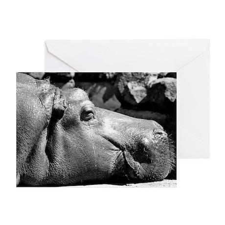 Hippo Doze Greeting Cards (6)