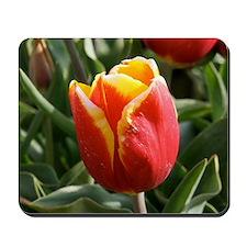 Yellow-Tipped Tulip Mousepad