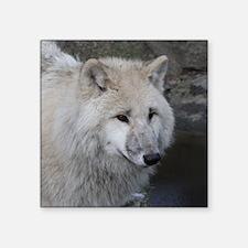 "Wolf 0215 Square Sticker 3"" x 3"""