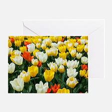 White, Yellow and Orange Tulips Greeting Card