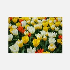 White, Yellow and Orange Tulips Rectangle Magnet
