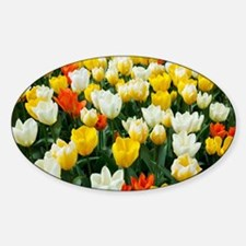 White, Yellow and Orange Tulips Sticker (Oval)