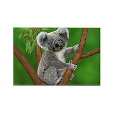 Blue-Eyed Baby Koala Magnets
