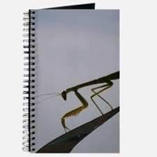 Praying Mantis Journal