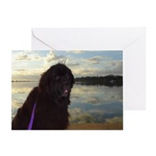 Newfie River Reflections Greeting Cards