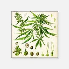 Cannabis or Hemp Illustration Sticker