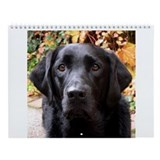 Black labrador Wall Calendars