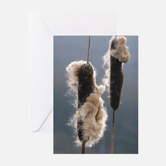 ...Bulrush... Note Cards (Pk of 10)