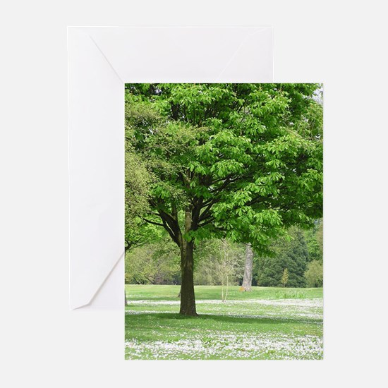 ...Daisy Copse... Note Cards (Pk of 10)
