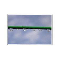 ...Raindrops... Rectangle Magnet