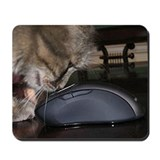Cats Mouse Pads