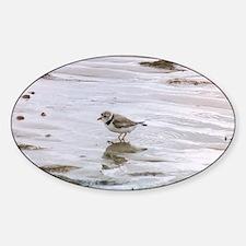 Unique Shorebirds Sticker (Oval)